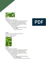 94165440-klasifikasi-tumbuhan-merambat