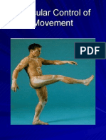 Muscular Control of Movement