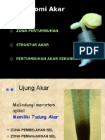 Anatomi Akar & Batang