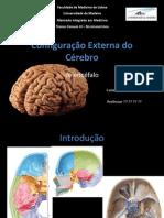 Configuração Externa do Cérebro