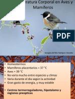 Temperatura Corporal en Aves y Mamíferos