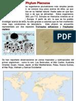 Placozoa