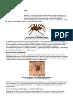 Conhecendo algumas aranhas
