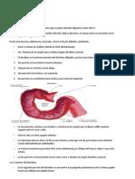 Vísceras del abdomen