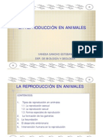 reproduccion de animales