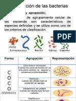 Clasificación de las bacterias EXPOSICON