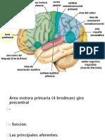 Configuración Interna Cerebro