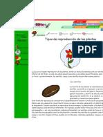 Tipos de reproducción de las plantas
