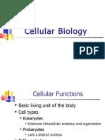 Cellular Biology Fall 08