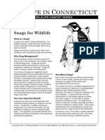 Snags for Wildlife