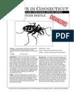 Puritan Tiger Beetle