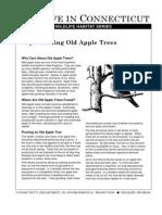 Rejuvenating Old Apple Trees
