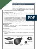 MIOLOGÍA - MUSCULOS - ARTROLOGIA - ARTICULACIONES
