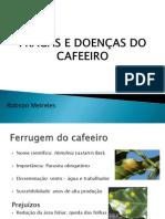 PRAGAS E DOENÇAS DO CAFEEIRO