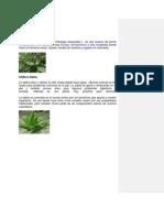 8 Plantas Medic in Ales Con Imagen