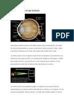 Cómo funciona el ojo humano
