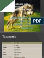 Presentación lobo mexicano expo