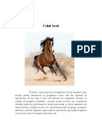 Calul Arab