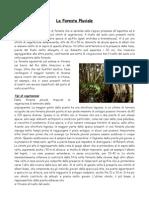 Ricerca Foresta pluviale