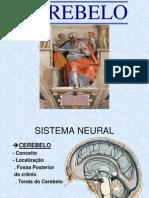 Cerebelo + Cérebro- 2007 1 OK