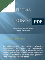 celulas_troncoCEGAL