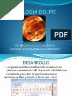 Embriologia Del Pie
