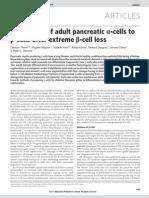 Pancreatic b Cells