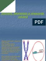 telomerii, telomeraza si sinescenta celulara.