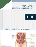 ANATOMI Sistem urinaria by dr. Rifal