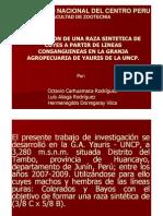 Formacion de Una Raza Sintetica de Cuyes a Partir de Lineas Con Sanguine As en La Granja Agropecuar