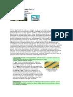 Sistemas Agroflorestais (SAFs)