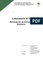 Informe Fisio N°6