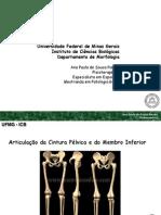 Articulação da cintura pelvica e do membro inferior