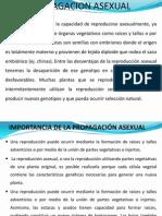 Propagacion Asexual Capitulo 2.1