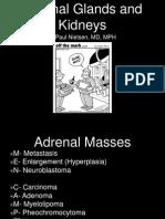 Adrenals and Kidneys