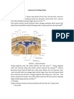Anatomi Dan Fisiologi Kepala