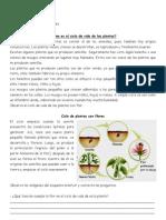 ciclo de plantas