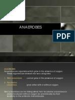 Anaerobes