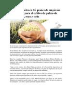 Altillanura está en los planes de empresas extranjeras para el cultivo de palma de aceite