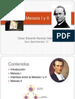 meiosisiyii-120516171935-phpapp01 (2)