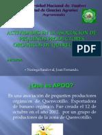 Control de Trips de La Mancha Roja Del Banano y Etapa de Produccion Del Banano Organico