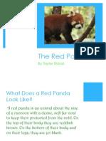 RED PANDA!!!!!!!!!