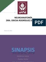 Clase Neuro Sinapsis_23Ene2012