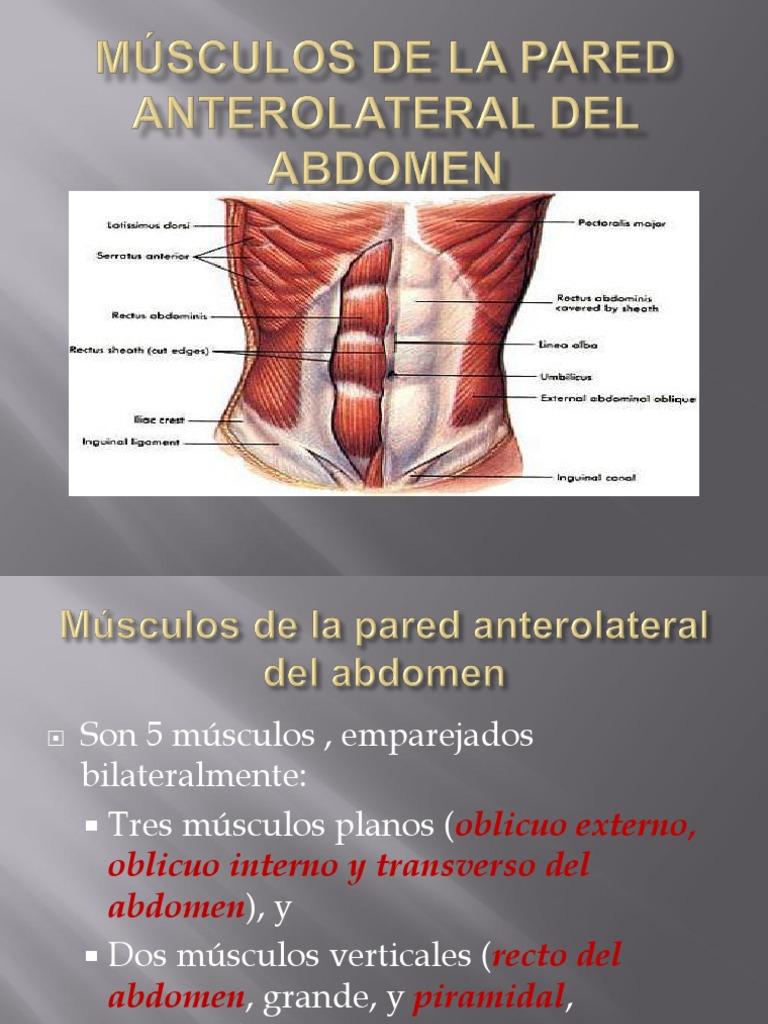 MÚSCULOS DE LA PARED ANTEROLATERAL DEL ABDOMEN