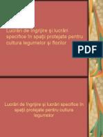 Lucrari de Ingrijire Si Lucrari Specifice in Spatii Protejate Cultura Legumelor Si Florilor