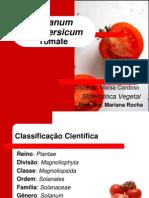 Lycopersicon esculentum - Tomate