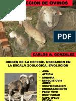 PRODUCCION DE OVINOS