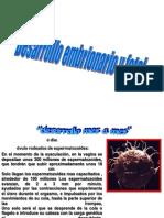 Desarrollo Fetal Embrionario