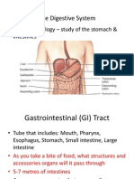 Digestive System Power Point for Lecture