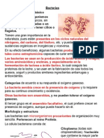 Paper Prueba Microorganismos